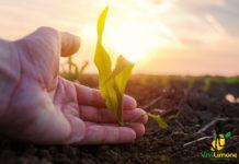 giornata mondiale della lotta contadina