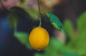 frutto del limone