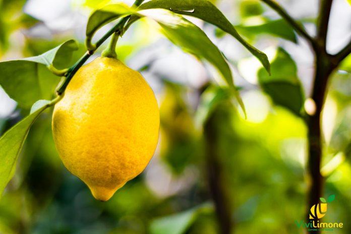 origine del limone